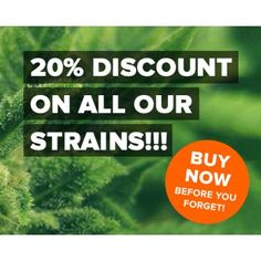 The Ins & Outs Of Buying Cheap Cannabis, discounted cannabis, discounted weed, discounted marijuana