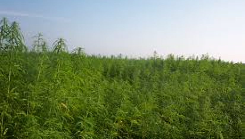 hemp-farming-act-hemp-futures-cbd-research-and-more-with-the-farm-bill-of-2018_1