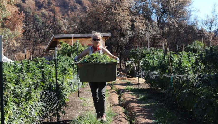 how-aster-farms-is-rebuilding-after-the-mendocino-county-fire_1